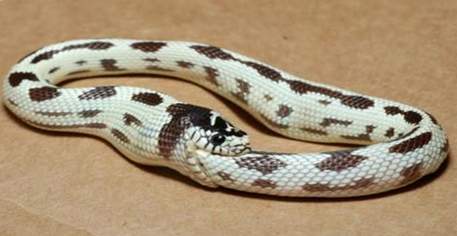 Main news thread - conflicts, terrorism, crisis from around the globe - Page 30 Snake-eating-itself