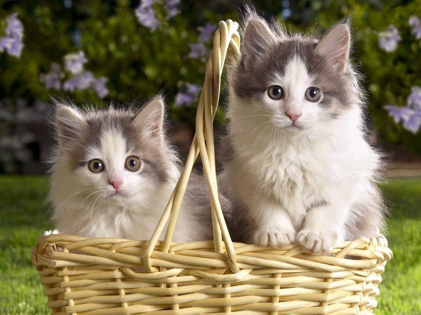 -_-cats-cats-22065940-1600-1200